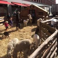 De Grote Mobiele Kinderboerderij
