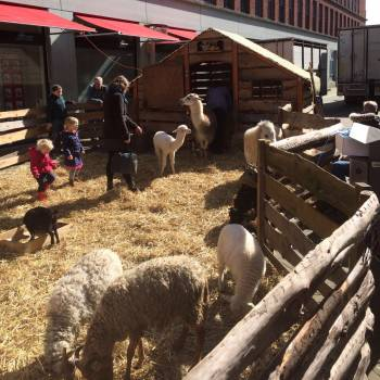 De Grote Mobiele Kinderboerderij huren of boeken?