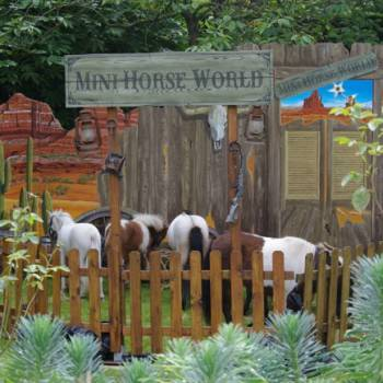 Mini Horse World inhuren of boeken