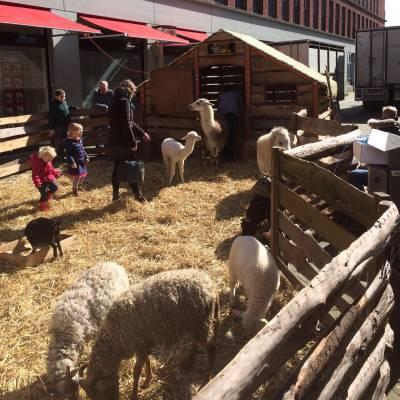 De Grote Mobiele Kinderboerderij huren of boeken? | JB Productions