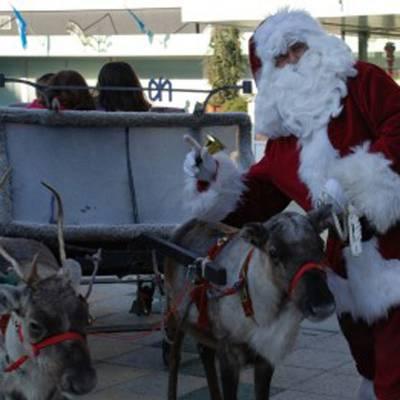 Rendieren met Arrenslee boeken of inhuren? | Sint en Kerst