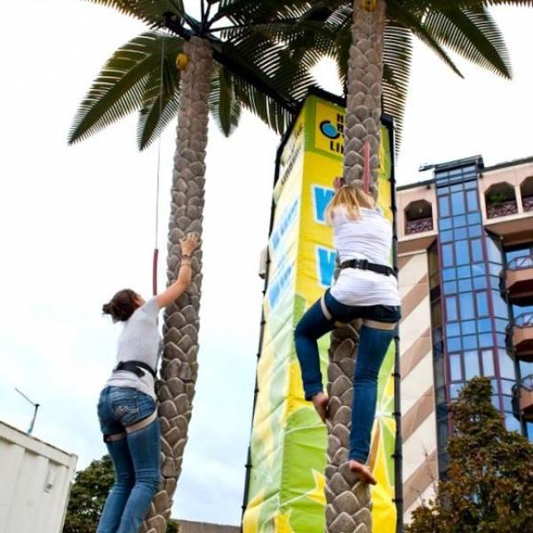 Palmboom Klimmen inhuren of boeken? | JB Productions
