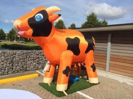 Ranja koe huren | Partyspecialist.nl