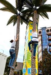 Palmboom Klimmen inhuren of boeken | JB Productions