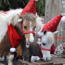 Mini Horse World - Kerst thema inhuren of boeken | JB Productions