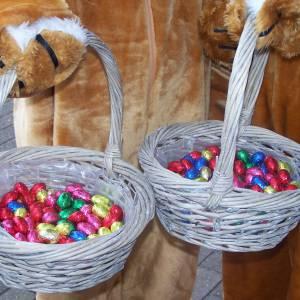 2 Paashazen delen chocolade eieren uit inhuren?