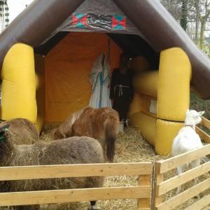 Mini levende kerststal met dieren huren