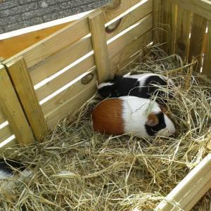Mini Kinderboerderij op locatie boeken of huren?
