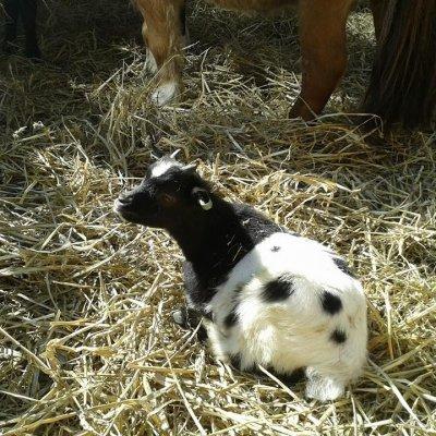Fotoalbum van Mini Kinderboerderij | Kindershows.nl