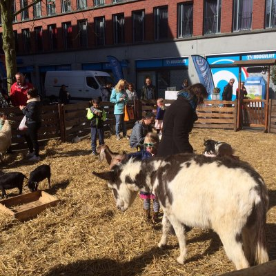 De Grote Mobiele Kinderboerderij boeken