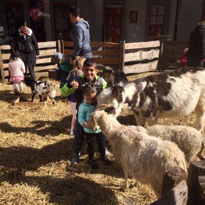 De Grote Mobiele Kinderboerderij huren