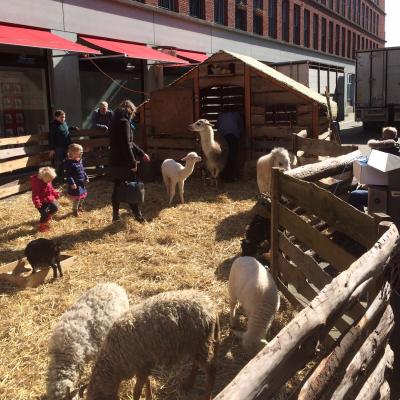 De Grote Mobiele Kinderboerderij  inhuren