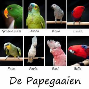 Salvatores Papegaaienshow boeken