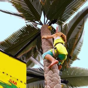 Palmboom Klimmen boeken