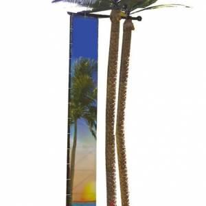 Palmboom Klimmen boeken?