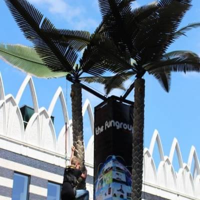 Palmboom Klimmen huren?