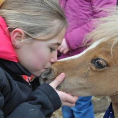 Mini Horse World boeken
