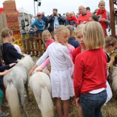 Mini Horse World huren