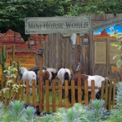 Mini Horse World inhuren?