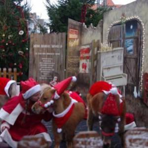 Mini Horse World - Kerst thema boeken of inhuren?