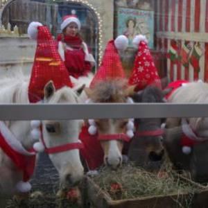 Mini Horse World - Kerst thema inzetten of boeken?