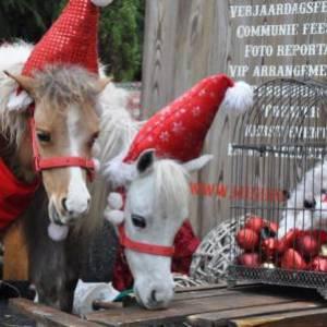 Mini Horse World - Kerst thema inhuren ov inzetten?