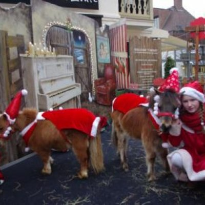 Mini Horse World - Kerst thema inzetten?