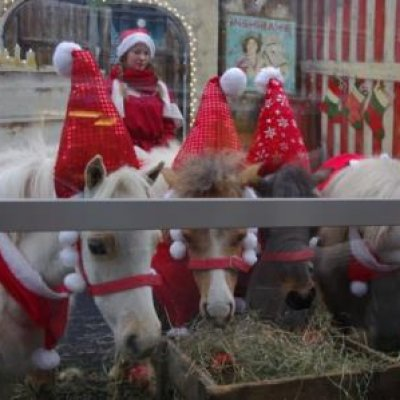Mini Horse World - Kerst thema inzetten of boeken?