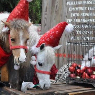 Mini Horse World - Kerst thema inhuren ov inzetten?