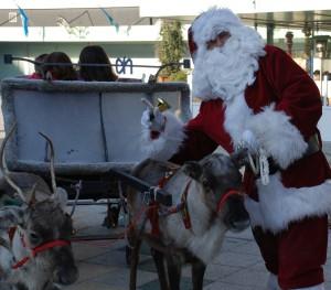 Foto van Rendieren met Arrenslee | Sint en Kerst
