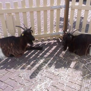 De Knuffel Dierenboerderij huren