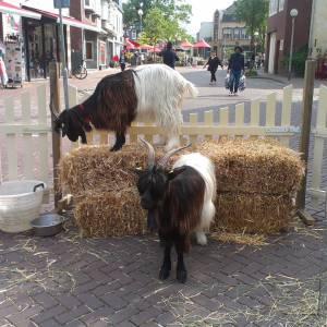 De Knuffel Dierenboerderij inhuren