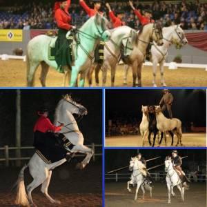 Spaanse Andalusische Paardenshow inhuren