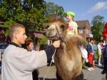 Foto van Kamelen verhuur | JB Productions