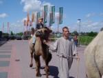 Fotoalbum van Kamelen verhuur | Attractiepret.nl